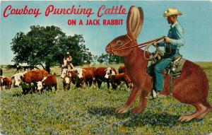 Rabbit Riding Cowboy Punching Cattle On A Jack Rabbit Postcard