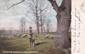 BALTIMORE, Maryland, PU-1906 ; Shepard and his Sheep, Druid Hill Park