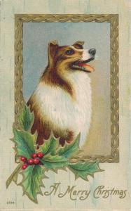 Christmas Greetings from the Dog - Collie - pm 1909 at Rochester NY - DB