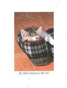 Cat Sleeping Lying In French Slippers Shoes Shoe Always Dream Of You Postcard