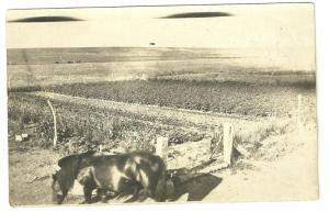 Our Garden CYRO 1904 - 1920, Real Photo Postcard