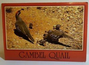 Vintage Postcard Arizona Gambling Quail Tempe wild desert bird 1989