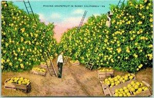 1940s California Agriculture Farming Postcard Picking Grapefruit Orchard Linen