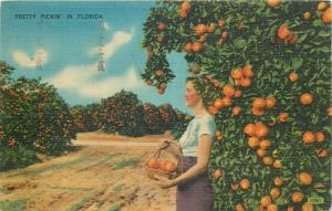 United States pretty picking oranges in Florida