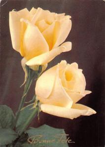 Bonne Fete, Happy Birthday, anniversary, Light Yellow Roses