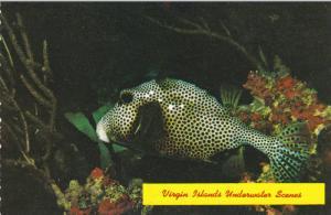 Virgin Islands Underwater Scenes , 50-70s ; Shellfish