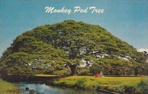 Hawaii  Honolulu Hawauuan Monkey Pud Tree