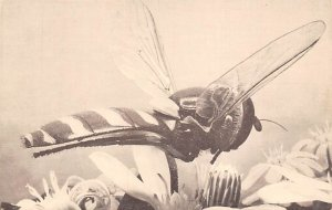 Fly Insect Unused