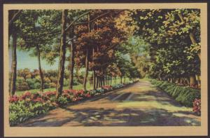 Wooded Drive