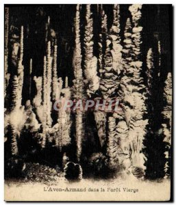Old Postcard The Aven Armand in the Virgin Forest