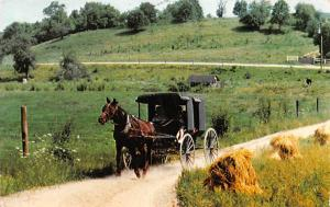 OH. Millersburg, Yoder's Amish Home, buggy, horse carriage