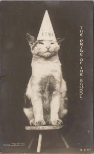 Cat with Dunce Cap 'The Pride Of The School' Humour c1905 Rotograph Postcard D86