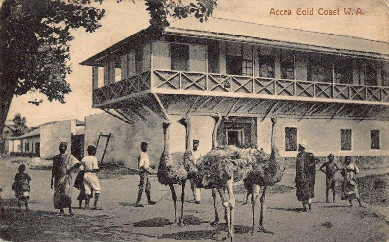 Ghana Gold Coast Accra ostrich birds Postcard