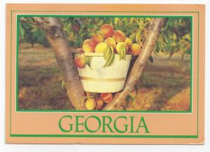 Georgia Peaches 1993 Steve Yost Postcard Peach Basket 4X6