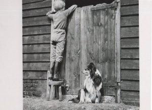 Boy Farm & Lassie Dog at Horse Stable Door 1960s Photo Postcard