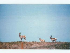 Pre-1980 THE SWIFT AMERICAN PRONGHORN ANIMAL Postmarked Cheyenne WY E9118