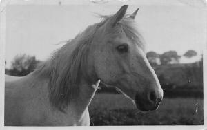White Horse Close-Up, Mariott's Photo Stores 1914