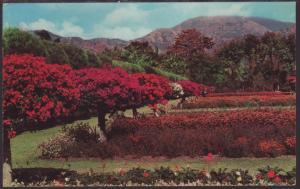 Royal Botanical Gardens,Kingston,Jamaica Postcard BIN