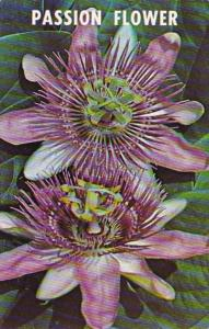 Flowers The Passion Flower