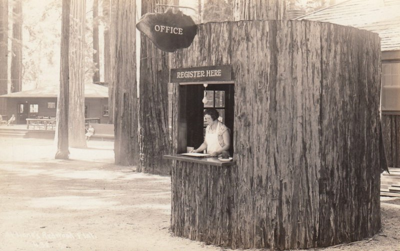 RP: REDWOOD FLAT , California , 1930s ; Patterson