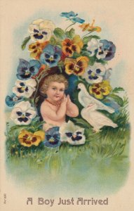 BIRTHDAY , 1900-10s ; A Boy Just arrived , Pansy Flowers