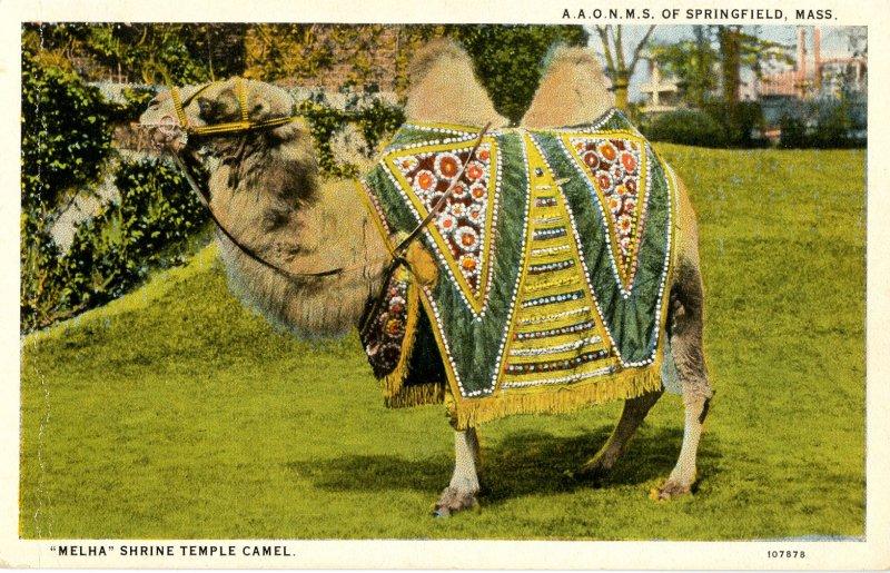 MA - Springfield. Melha Shrine Temple Camel, A.A.O.N.M.S.