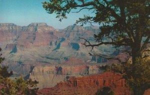 Postcard - AZ - Northern Arizona Grand Canyon - Scenic - Unposted