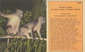 Monkeys At Monkey Jungle 22 Miles South Of Miami Florida