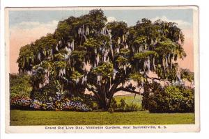 Grand Old Live Oak, Middleton Gardens, Summerville, South Carolina, Ashville,...