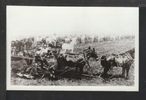 Horse and Buggies Postcard