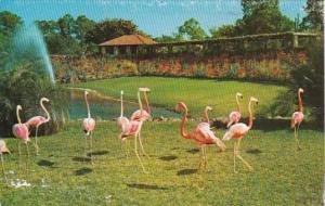Florida Miami Flamingos Parrot Jungle Red Road