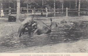 Exposition Coloniale Les Elephants de L'Inde 1907  Hagenbeck Circus and Zoo