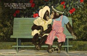 Florida St Petersburg Florida Wild Animal Ranch Monkeys Kissing A Green Bench...