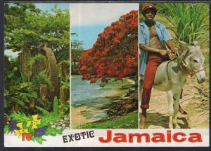 Multi-View Jamaica BIN