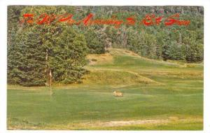 Golf Course, The Old Pro Approaching The 18th Green, 1940-1960s