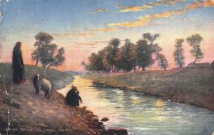 Egypt Cairo On The Irrigation Canal River Sheep Postcard
