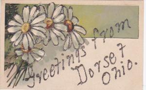 DORSET, Ohio, 1900-1910's; Daisies