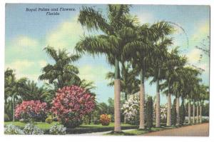 Royal Palms and Flowers Florida Curteich Linen 1949