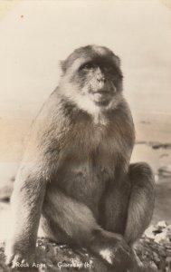 RP: GIBRALTAR , 1930s;  Rock Ape