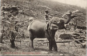 Ceylon Elephant Work on New Clearing Sri Lanka Postcard E71