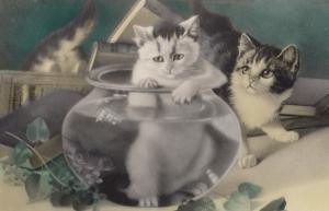 Kitten Stuck In Goldfish Bowl Vintage Russian Real Photo Cat Postcard