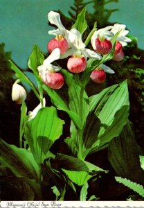 Minnesota Official State Flower The Showy Lady Slipper