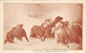 Sheep Sheep 1909 writing on front