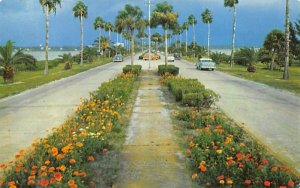 Flowerlined Causeway, Clearwater, Clearwater Beach Misc, Florida
