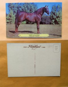 Five-Gaited American Saddle Horse Postcard Unused Greeting From Dallas, Texas