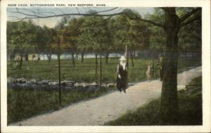 New Bedford MA Deer Cage Buttonwood Park c1920 Postcard