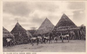 Village Cattle Farming , Sierra Leone , 00-10s