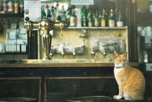 Cat Sitting On Lounge Saloon Pub Inn Bar By Beer Barrell Tap Postcard