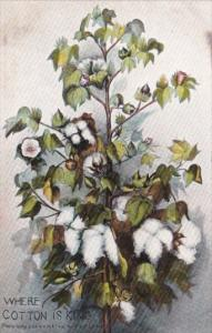 Cotton Where Cotton Is King