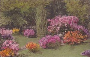 Wormsloe Gardens Isle of Hope, Savannah, Georgia,PU-1938